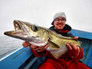 Schöner Pollack beim angeln auf den Färöer Inseln.