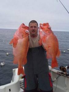Angeln Havoysund Norwegen - Tolle Rotbarsche beim angeln in Havöysund in Nordnorwegen