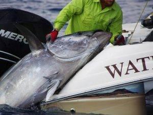 Big Game Fishing Spanien Valencia - Meeresangeln auf Thunfisch und Bonito im Mittelmeer