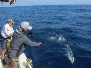 Big Game Fishing Valencia - eine Angelreise der Superlative. Thunfisch angeln ganz nah !