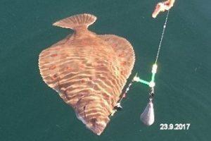 fynshav-angelboot-charter-ostsee-kleiner-belt-meeresangeln- (20)