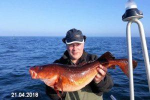 fynshav-angelboot-charter-ostsee-kleiner-belt-meeresangeln- (26)