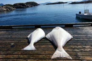 offersöy-feriesenter-angelreisen-norwegen-lofoten-angeln- (3)
