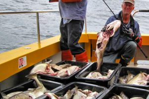 sea-hawk-seahawk-hochseeangeln-gelbes-riff-dänemark-hirtshals-angelreisen- (17)