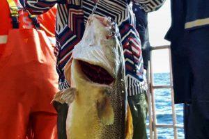 sea-hawk-seahawk-hochseeangeln-gelbes-riff-dänemark-hirtshals-angelreisen- (4)