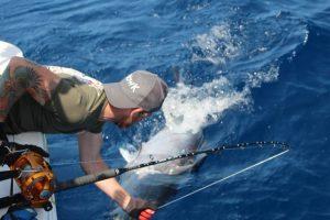 Toller Thunfisch im Drill beim Big Game Fishing Spanien ab Valencia